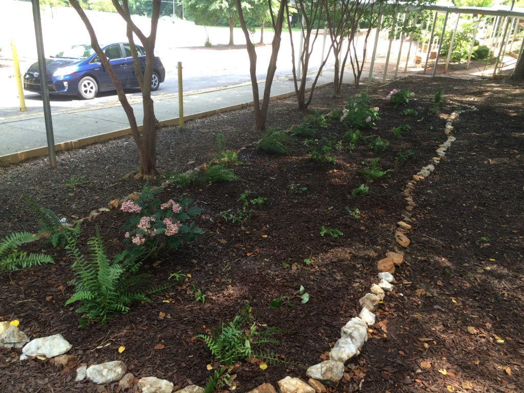 NC Native Plant Garden by Kimmy Gebbia